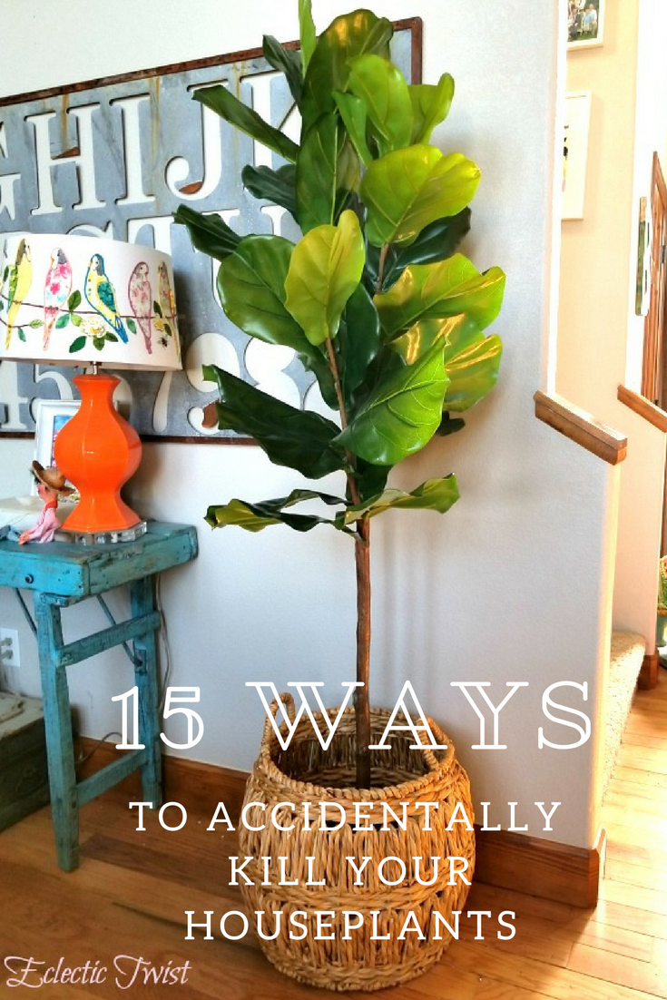 15 ways to accidentally kill your houseplants, trouble with houseplants, home, design, home decor, houseplants